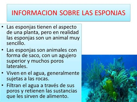 ANIMALES INVERTEBRADOS - ppt video online descargar
