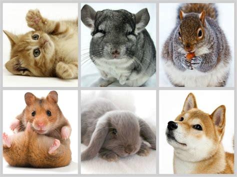 Animales que te harán morir de Amor   Todo mascotas