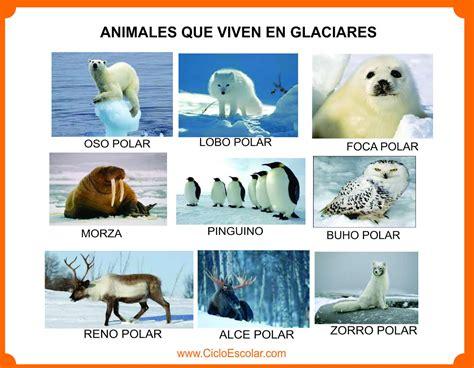 Animales que viven en el bosque, selva, mar, ríos ...