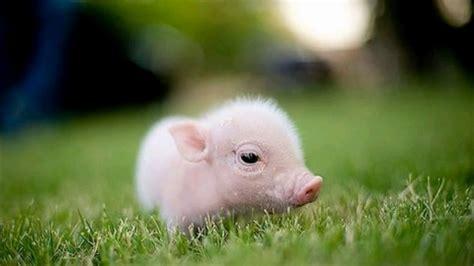 Animales tiernos, bonitos y pequeños  recién nacidos ...