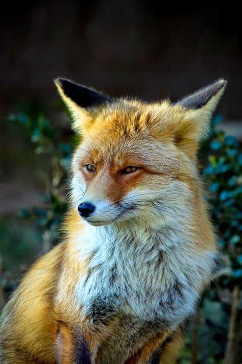Animales Tiernos Inspiran: animales tiernos inspiran imagenes