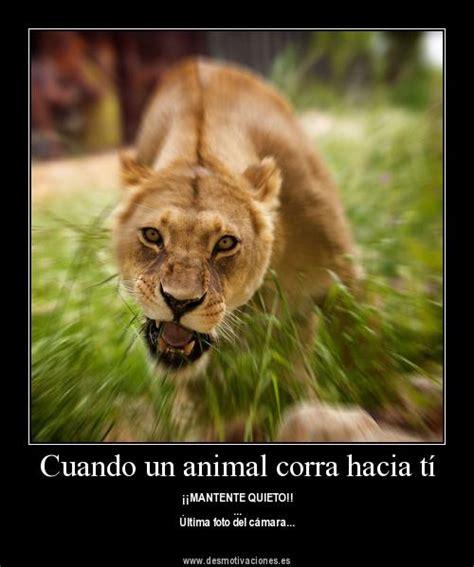 Animales Tiernos que Inspiran en Imagenes con Frases ...