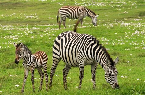 Animales vivíparos | Qué son, especies, ejemplos ...