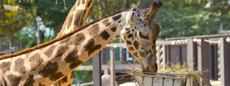 Animales y Plantas | Zoo Barcelona