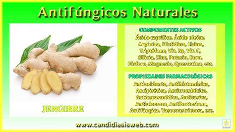 Antifúngicos de origen natural   Jengibre