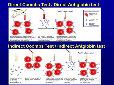 Antigen – Antibody Reactions - ppt video online download