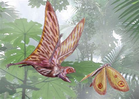 Anurognathidae - Wikipedia