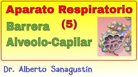 Aparato Respiratorio  5 : Barrera Alveolo Capilar ...