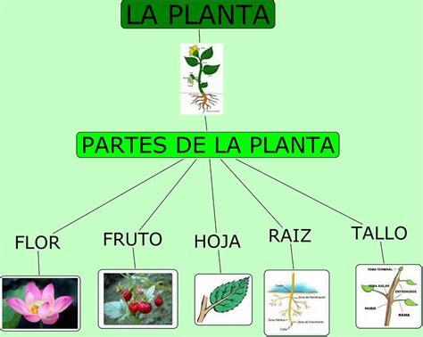 APRENDE Y DIVIERTETE: PARTES DE LAS PLANTAS