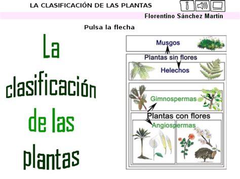 APRENDER ES DIVERTIDO: LA CLASIFICACIÓN DE LAS PLANTAS ...