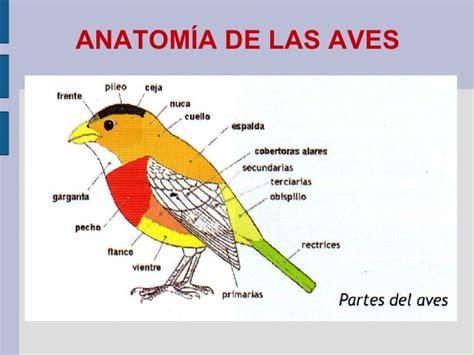 Aprendiendo a observa aves