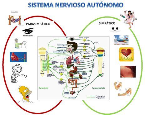 Aprendiendo fisiología humana: Sistema nervioso autónomo