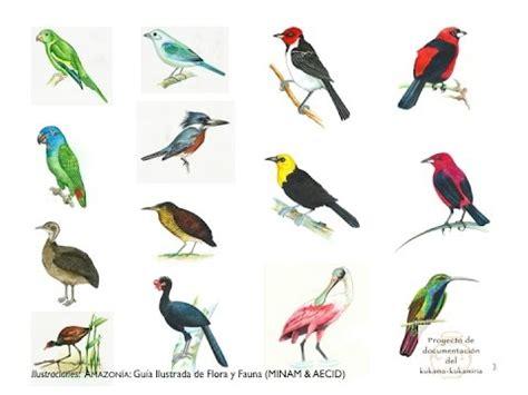 Aprendiendo kukama: aves pequeñas   YouTube