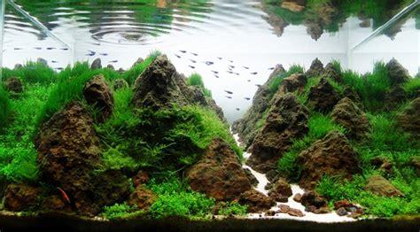 Aquário plantado   Aido Bonsai