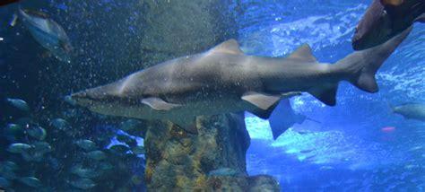 Aquarium de San Sebastián, San Sebastián   Programación y ...