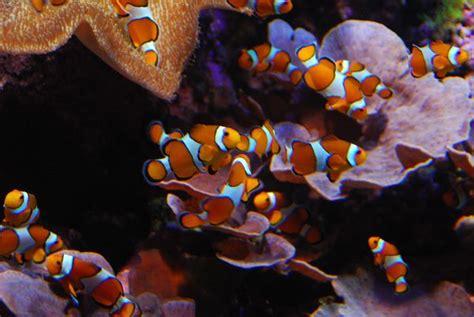 Aquarium de San Sebastián, un clásico de la ciudad