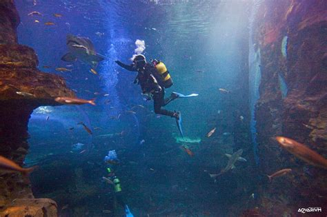 Aquarium Donostia  San Sebastián   Musées à Hendaye