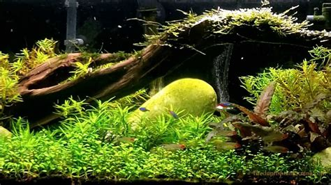 aquarium plants substrate - that a well planted tank needs ...