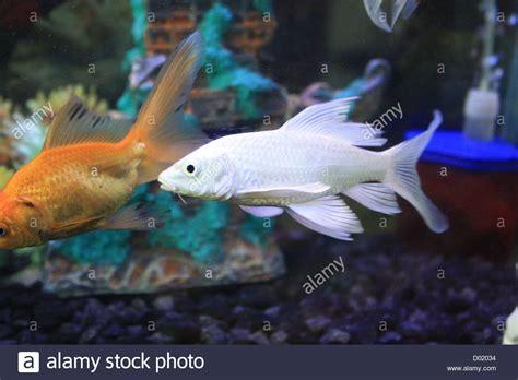 Aquarium Tanks For Sale.Freshwater Fish Aquarium Fish ...