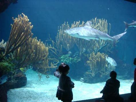 aquarium/zoo   Picture of The St. George s Club, St ...