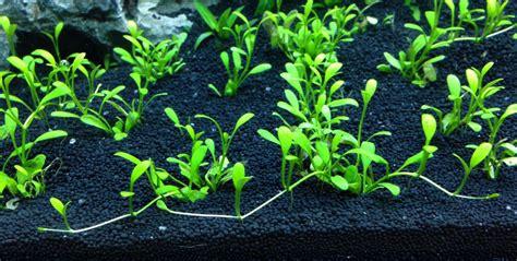 Aquascaping Basics: Planted Aquarium Substrate ...