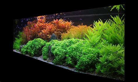 Aquatic plant deficiency - Aquarium-fertilizer.com