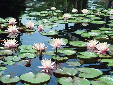 Aquatic Plants Need Your Help to get Ready for Winter ...