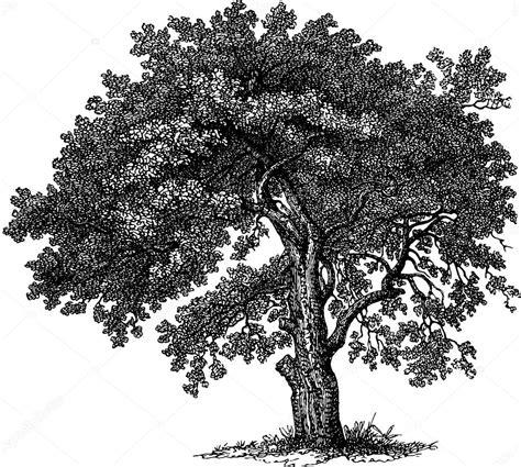 Árbol de dibujo vintage — Foto de stock © unorobus.gmail ...