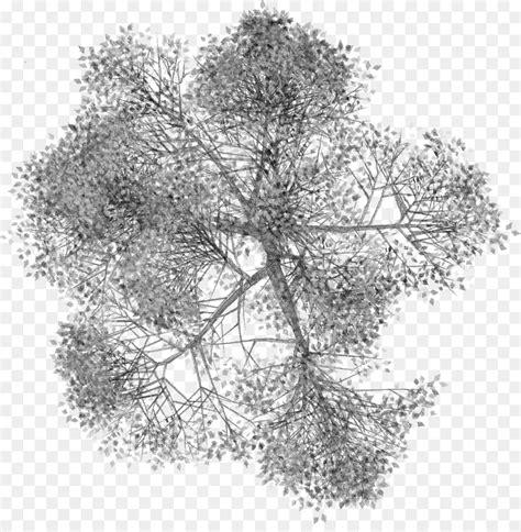 Árbol de plantas Leñosas   arboles png dibujo ...