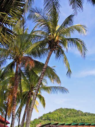 Árboles de coco, archivo de foto gratis, #1400569 ...