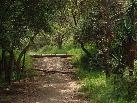 Archivo:Paisajes del Bosque de Tlalpan 02.JPG - Wikipedia ...