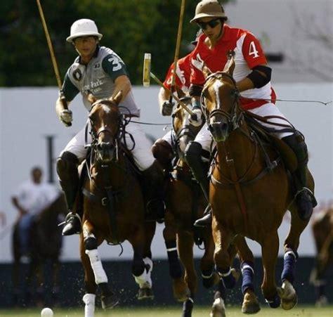 Argentine polo pony breeding boosted by biotech