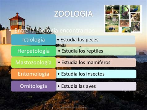 Ariana bermudez 9 3 ciencias biologia y sus ramas mas zoologia
