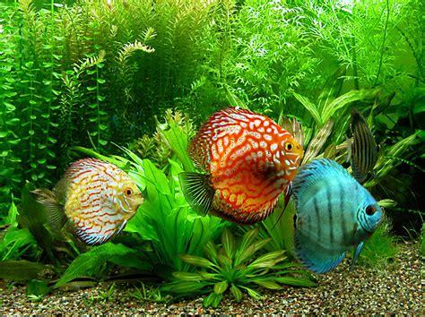 ARTE Y JARDINERÍA : Plantas acuáticas