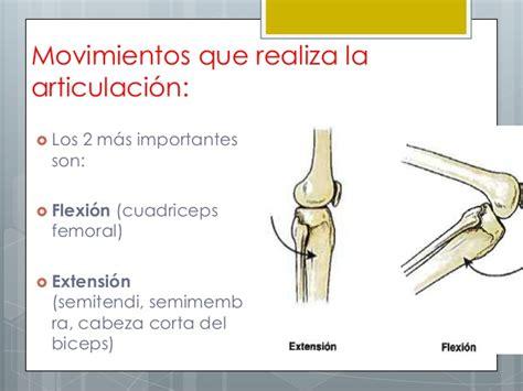 Articulacion de la rodilla expo.