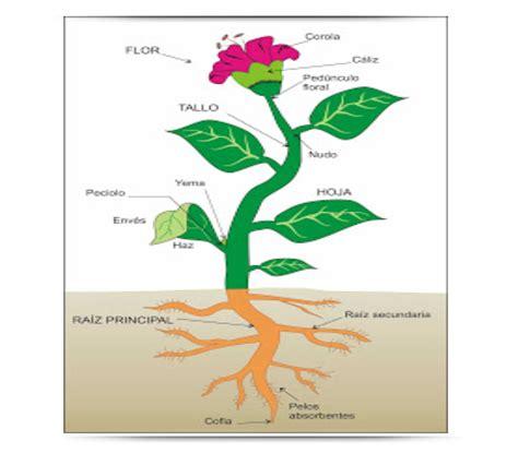 As plantas – Educación Primaria
