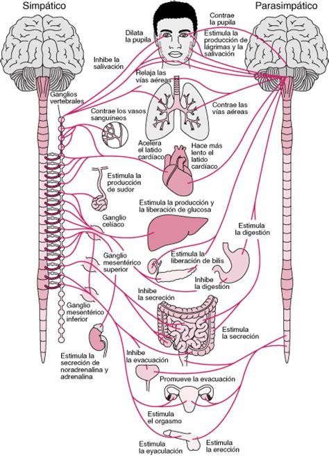 Aspectos generales del sistema nervioso autónomo ...