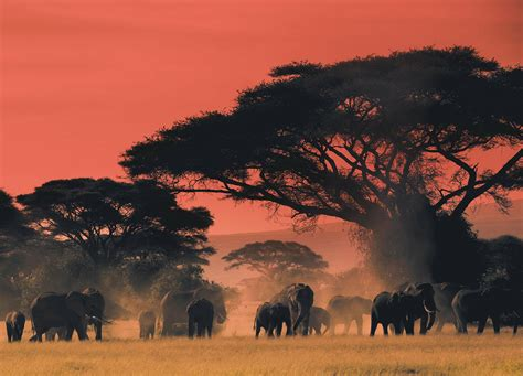 At the end of the day on the plains of Africa | Africa ...