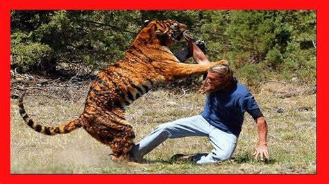Ataques Animales más Impactantes a Humanos   Animales ...
