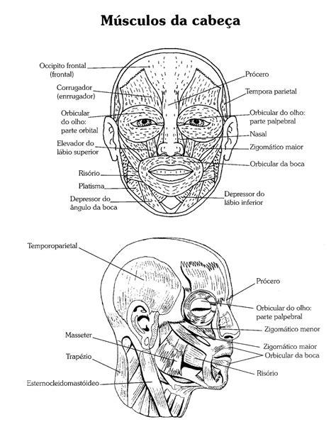 Atividades para colorir infantil: Atlas do Corpo Humano ...