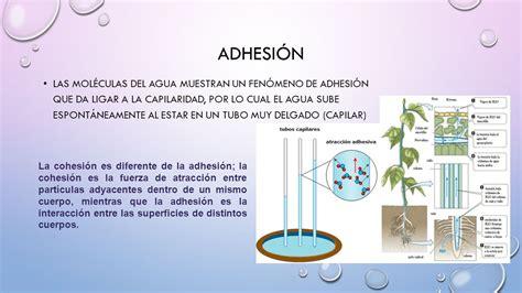 Átomo – Bioelementos – BioMoléculas – Organelos – Célula ...