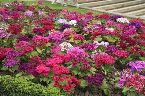 AuE Paisagismo: Setembro, mês da primavera, mês das flores..