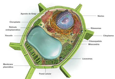 Aula de plástica: Vamos a construir la maqueta de una célula.