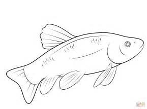 Ausmalbild: Fisch | Ausmalbilder kostenlos zum ausdrucken