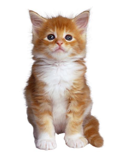 AutoGuau: Etapas de desarrollo del gato
