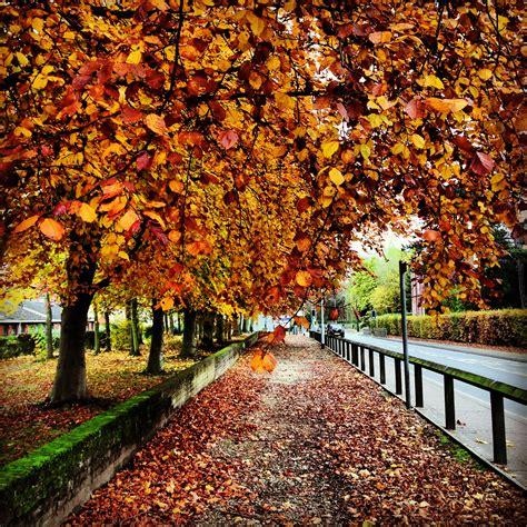 Autumn in England | Viv s View