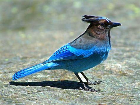 Aves | CECACI COMPUTACION