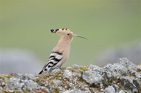 Aves de Extremadura Extremadura-espana.es