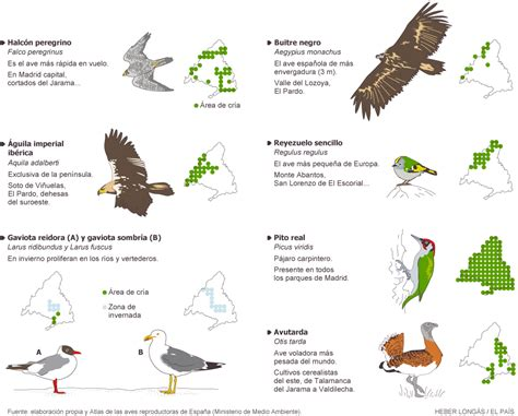 Aves de importancia mundial y local en Madrid   Madrid ...