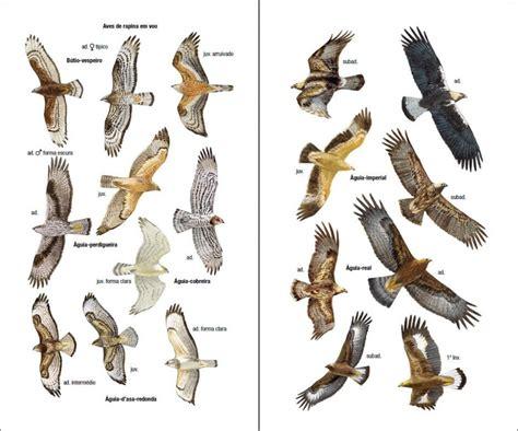 Aves de Portugal: Incluindo os Arquipélagos dos Açores, da ...